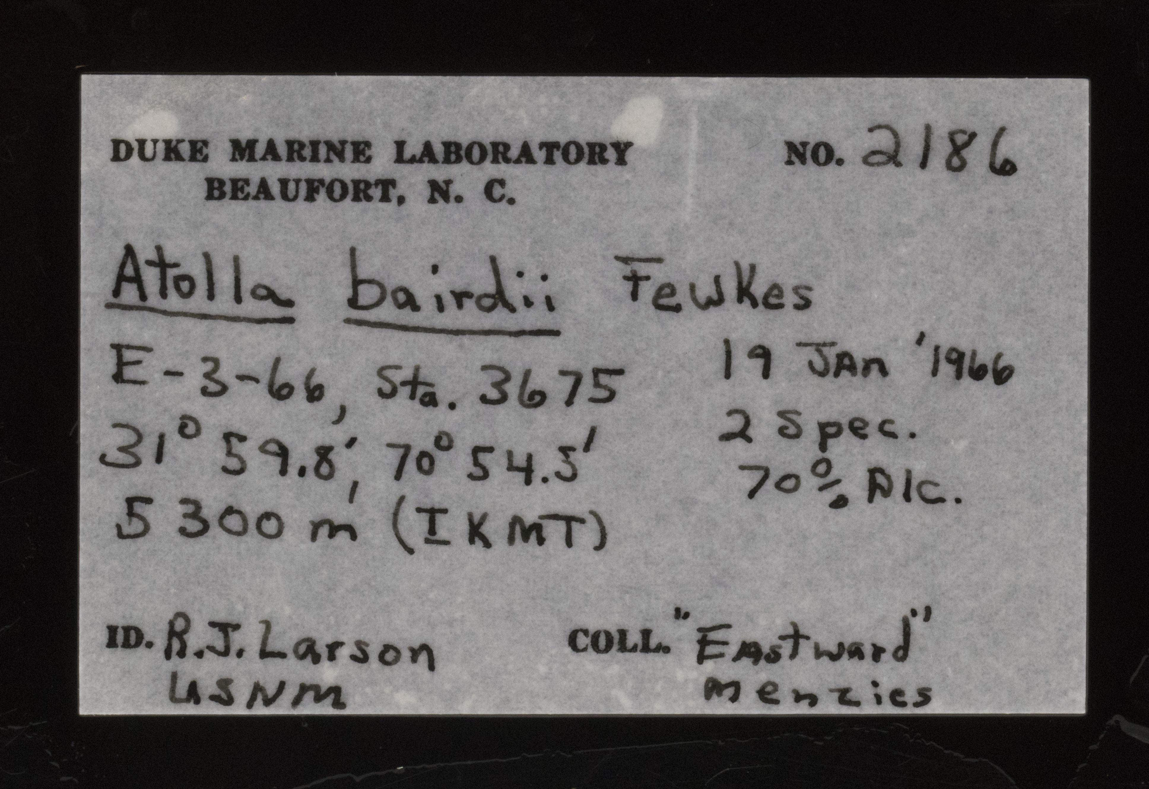 atollabairdii label